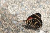 Papillons 2018