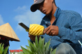 Expert cutting pineapple - Cai Rang Floating market