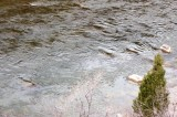 Ripples in the Roaring Fork