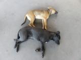 Cairo stray dogs