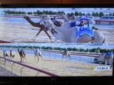 Dubai camel racing on TV