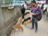 Kolkata feeding stray dogs