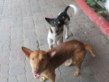Kolkata stray dogs