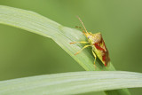 insect 061817_MG_8587