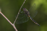 dragonfly 060318_MG_2159