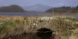 The Crom Mhin bridge at Loch Lomond NNR