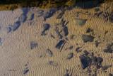 Underwater sand ripples