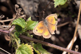 Gatekeeper, Brookhouse, South Yorkshire