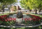 Tulip Time at Wichita State University