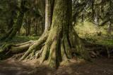 Tree Base