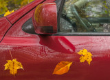 Leaves stuck to my car