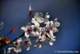May12_18_093.JPG