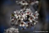 May12_18_170.JPG