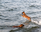 Dogs 0058 copy.jpg
