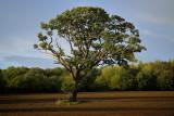 20170929 - Tree