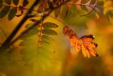 20171011 - Leaves