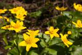 Minnesota Spring