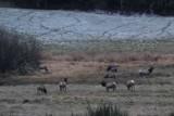 Elk Trails