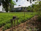 Farm in Tan Chau