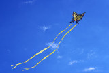 A Butterfly Kite