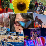 fairs_and_festivals
