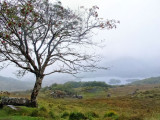 Somewhere along the Ring of Kerry