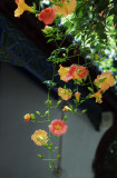 Blooming ivy