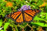 Butterflys, Moths, Bugs, and Bees