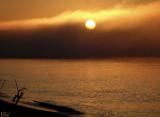 Lever de soleil dans le brouillard - Foggy sunrise