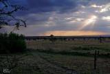 Maasaï Mara Zebra Plains Mara Camp