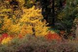 Fall Foliage Tumwater Canyon