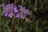 Butterflies, moths, bees and insects