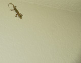 Hello, Gecko