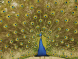 Mayfield Park, Austin, Texas (A Gallery)