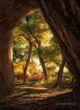 Natural Wood Framing
