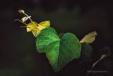 Green Leaf Shoot
