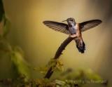 Spread My Wings