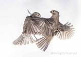 Flight of Fight