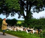Taming the Beagles