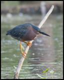 ECO-CAMPUS BIRDS  3