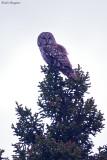 Sichuan Owl