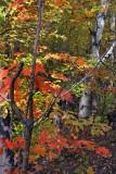 New Hampshire 01