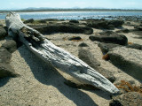 Drift Log, Broulee Island