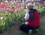 At Canberra Floriade