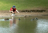 Feeding the ducks and coots