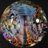 #8: Exploring Reef Luxury Size: 1.90 Price: $340