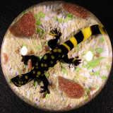 Lewis Wilson Marbles and Paperweights For Sale
