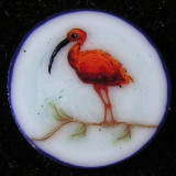 Scarlet Ibis  Size: 0.51  Price: SOLD