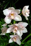 Orchid Show Missouri Botanical Gardens 2018