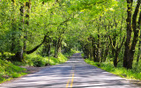 Tree lined Historic US Highway 30 along the Columbia River Gorge